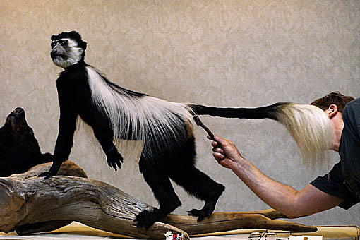 World Taxidermy Championships
